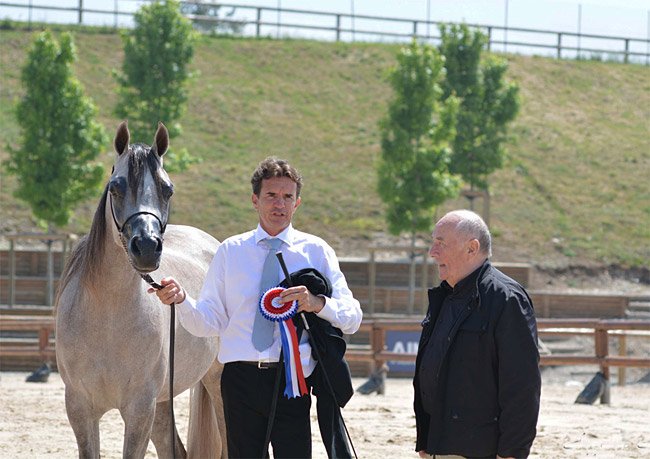 Commissions Show chevaux Pur Sang Arabe