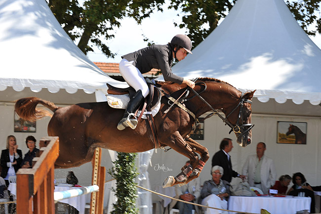 Commissions Sports chevaux Pur Sang Arabe